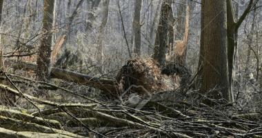 Vjetar otpuhao Svetog Petra iz Šume